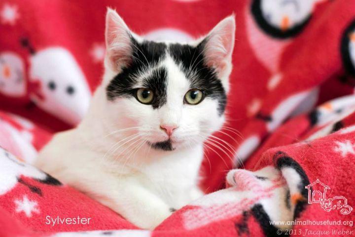 Sylvester 1