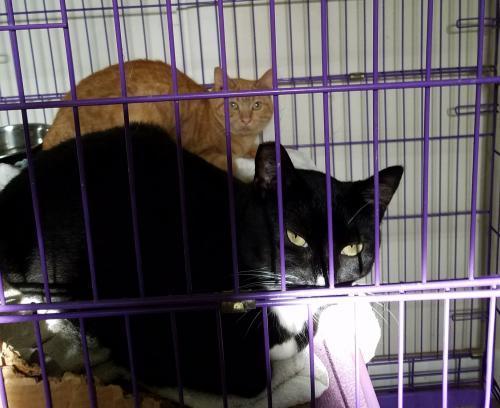 Barn Cats 3