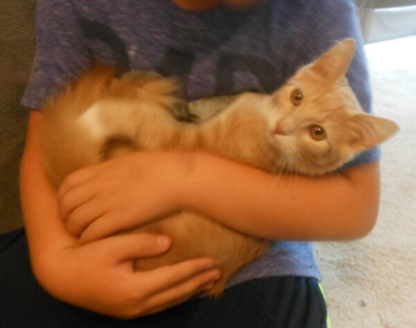 Aransas, an adopted Domestic Medium Hair in Reston, VA
