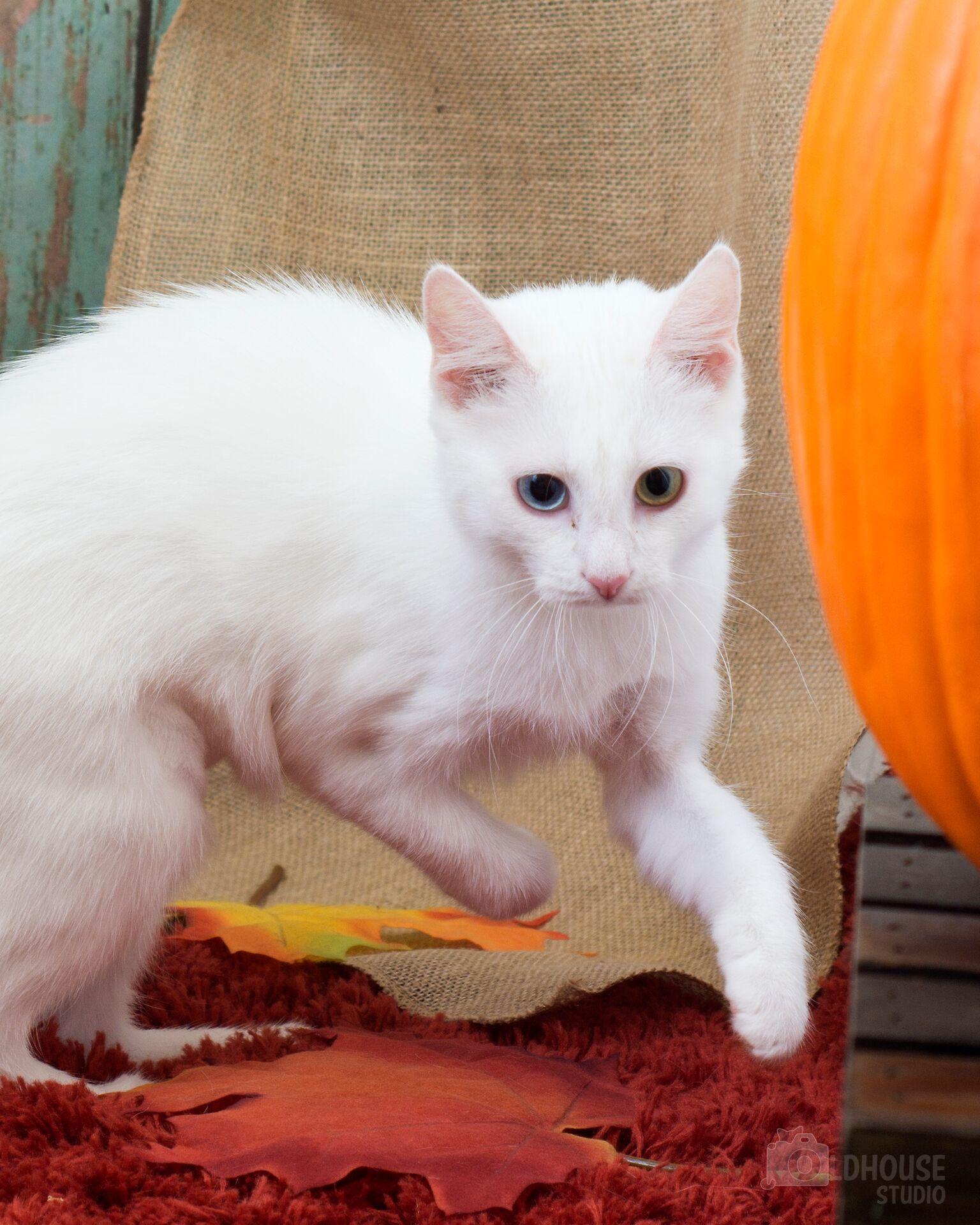 Hope - kitten!