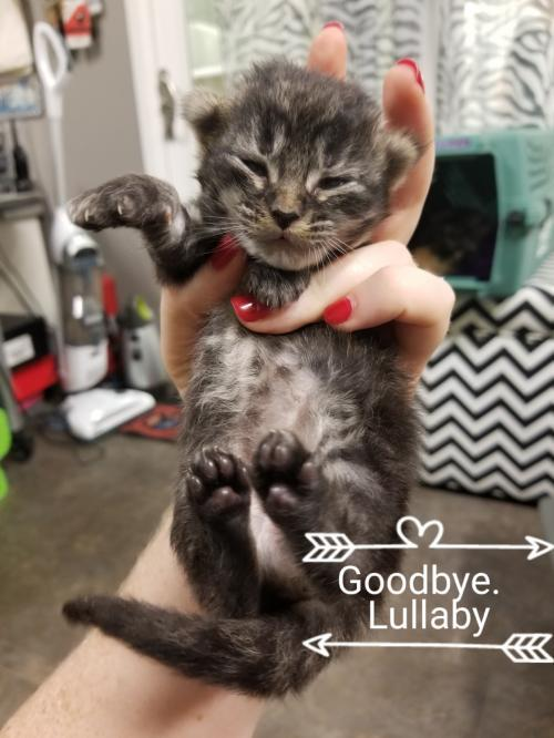 GOODBYE LULLABY- ADOPTED