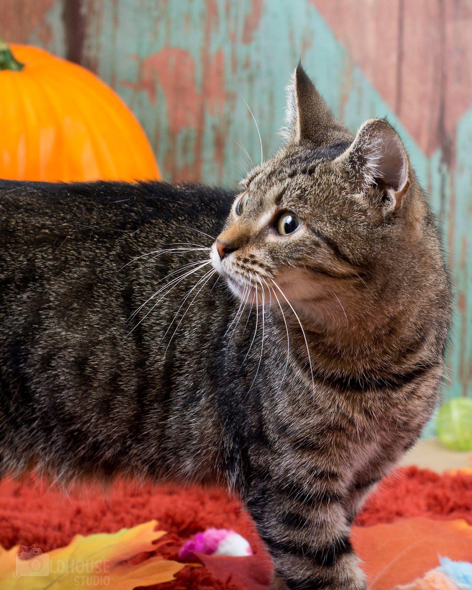 Shelby - Colony Cat!