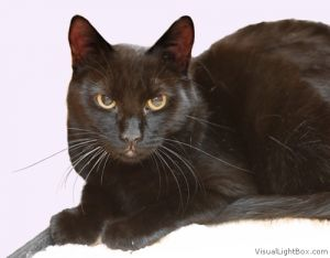 Sally Mae is shy but playful and likes other cats Sally Mae has been microchipp