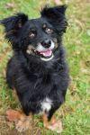 Dachshund Dog: Ricky