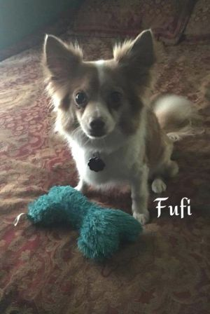 Suzy & Fufi (Bonded pair who must be adopted together)