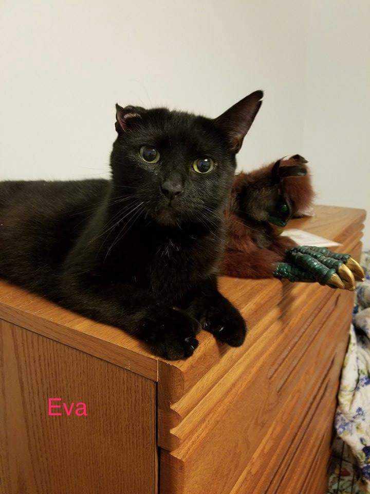Eva (CP)