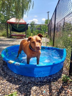 Birthdate 3152008 Breed One of a kind Hennessey with her gorgeous golden brown fur is a sweet