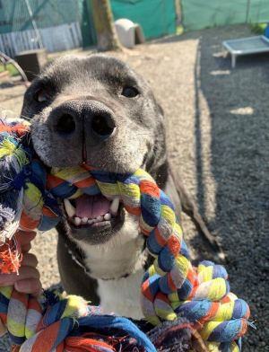 Birthdate 3152013 Breed One of a kind Jimmie loves playing with his toys and will jump into any