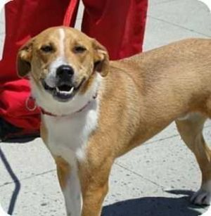 Birthdate 742009 Breed One of a kind Oliver has a big personality and a funky little underbite t