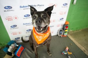 Birthdate 1162007 Breed One of a kind Sonya our pretty lady is patiently waiting for her perfe