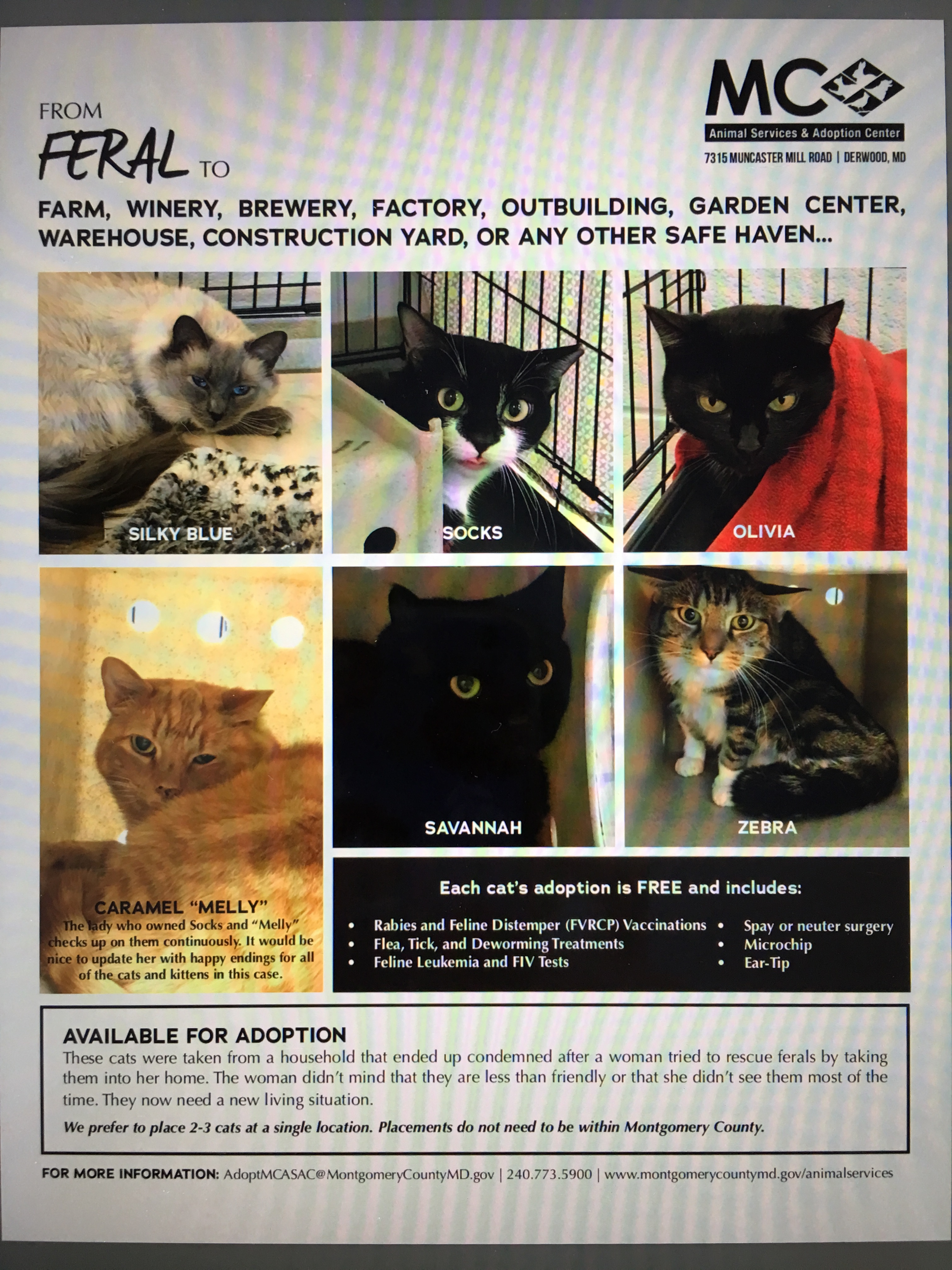 Adoption Center Near Me Cats - The O Guide