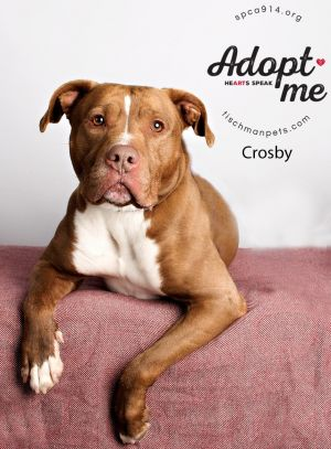 Crosby is called the mayor of the shelter He is around six years old He is wel