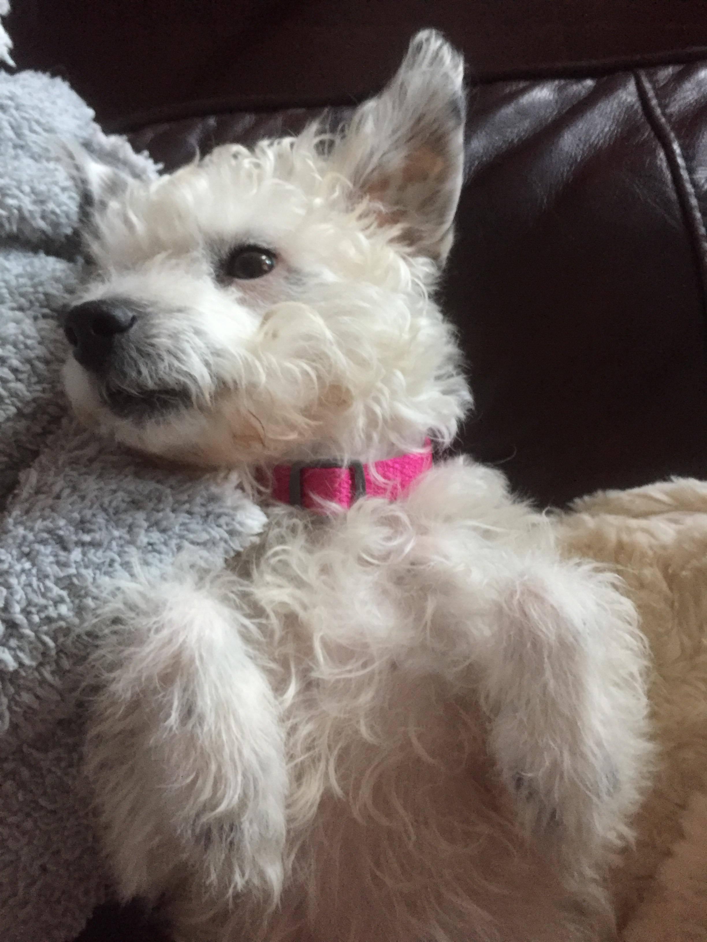 Daisy aka 'Starla'