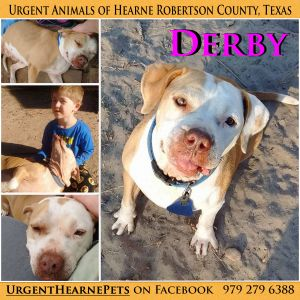 This dog is located at the Hearne animal control facility in Robertson country TX This is not a sh