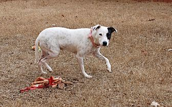 Claire, an adopted Terrier Mix in Woodstock, GA