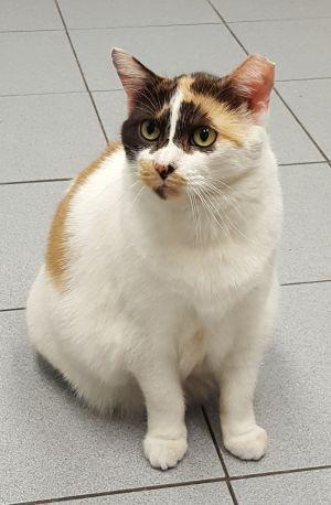 Cat Benetar