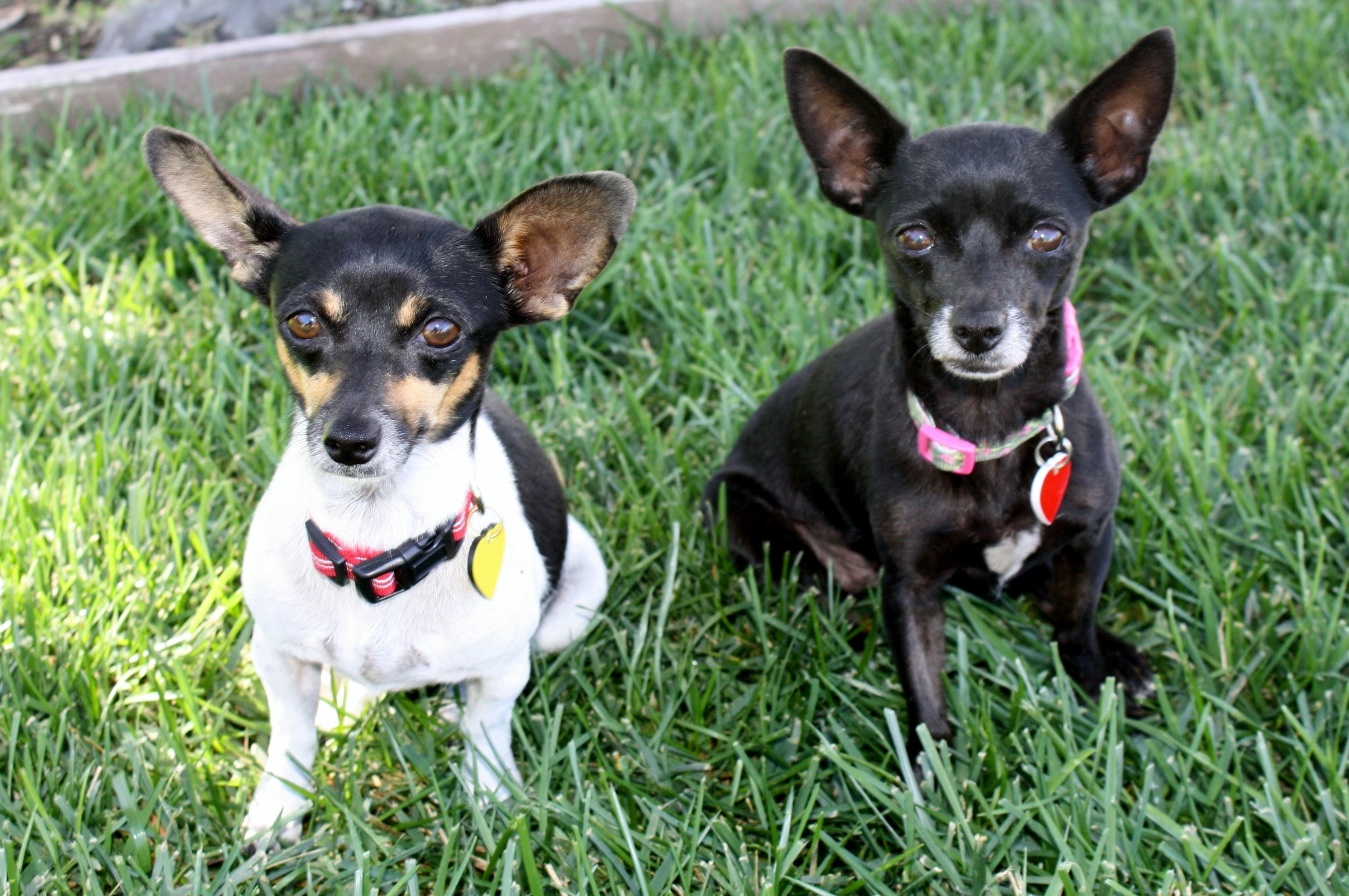 Agatha and Allie - Bonded pairs get along and keep each other company!