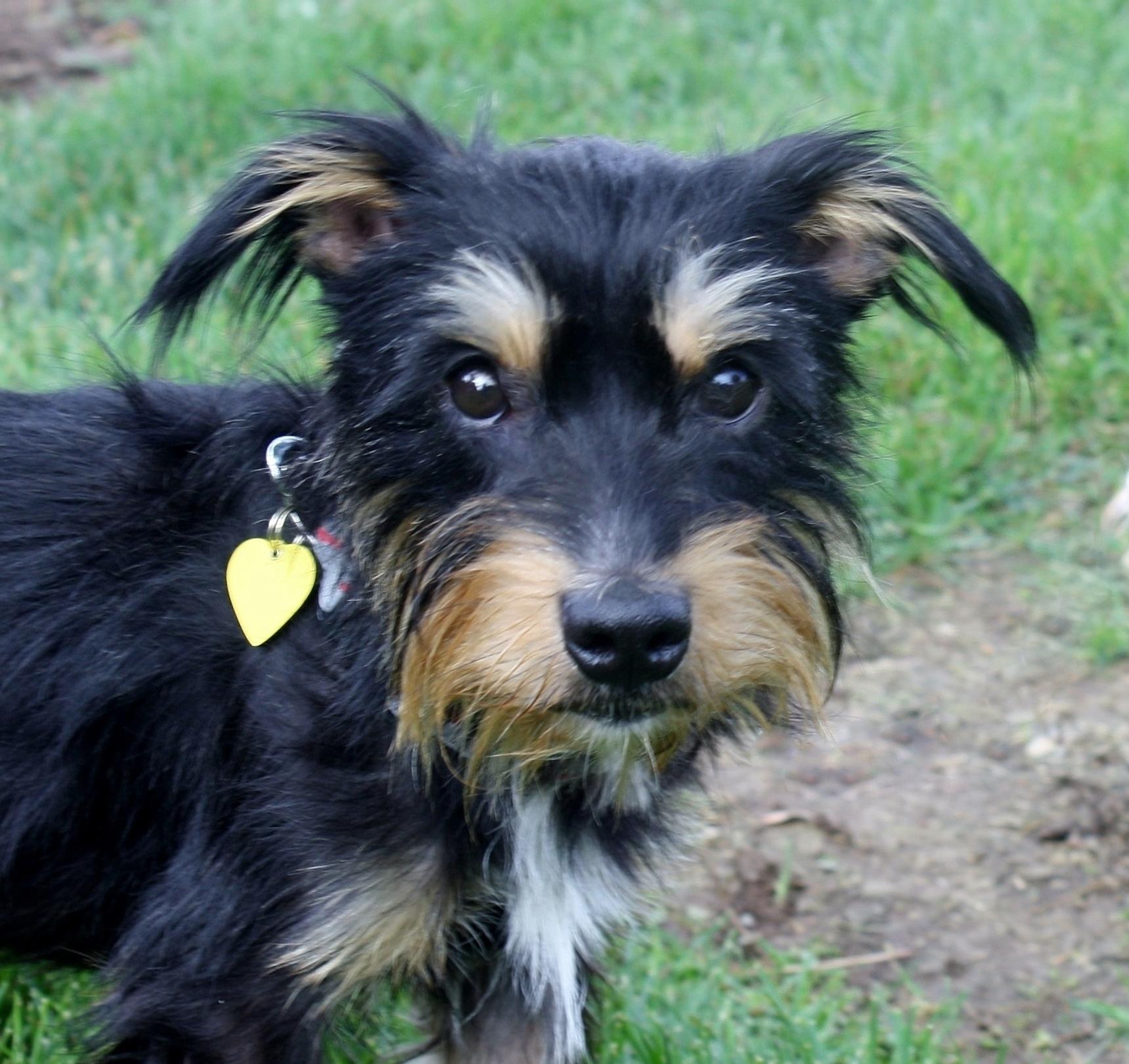 Gilda - I am a low to no shedding dog!