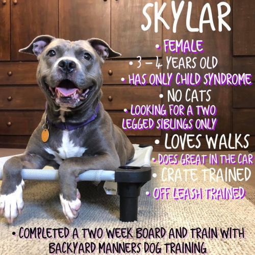 Skylar, an adoptable Pit Bull Terrier Mix in Catasauqua, PA