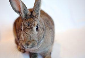 Garbo Bunny Rabbit Rabbit