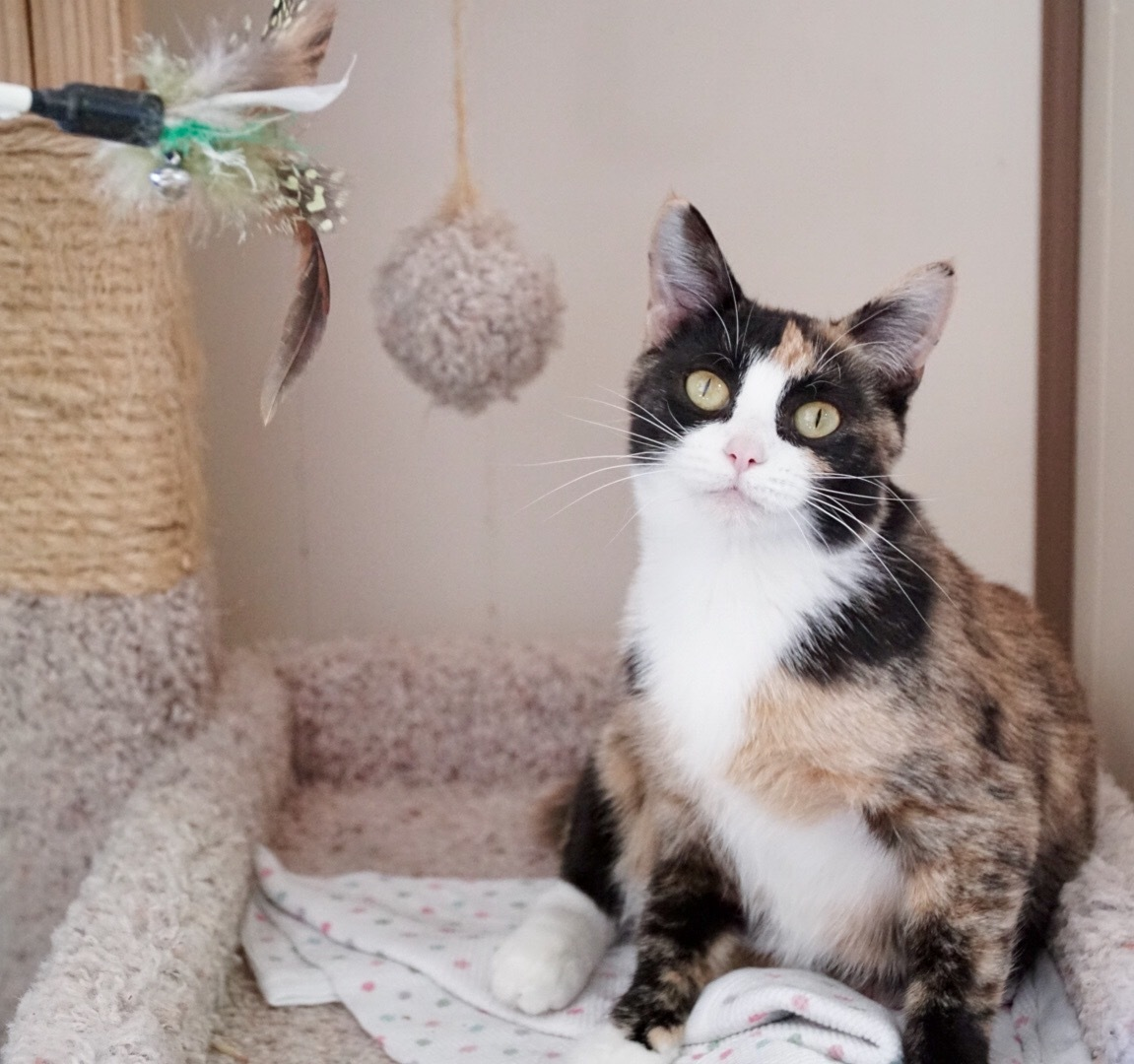 Cat for Adoption – Connecticut near Papillion NE