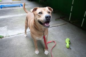 Peanut and his gorgeous dreamy eyes will wow you everytime Peanut loves to go out on his long walks