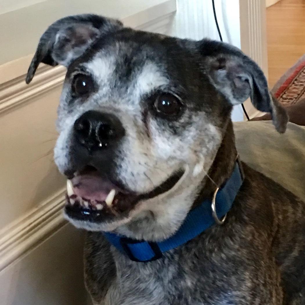 Cole - A Happy Active Dog