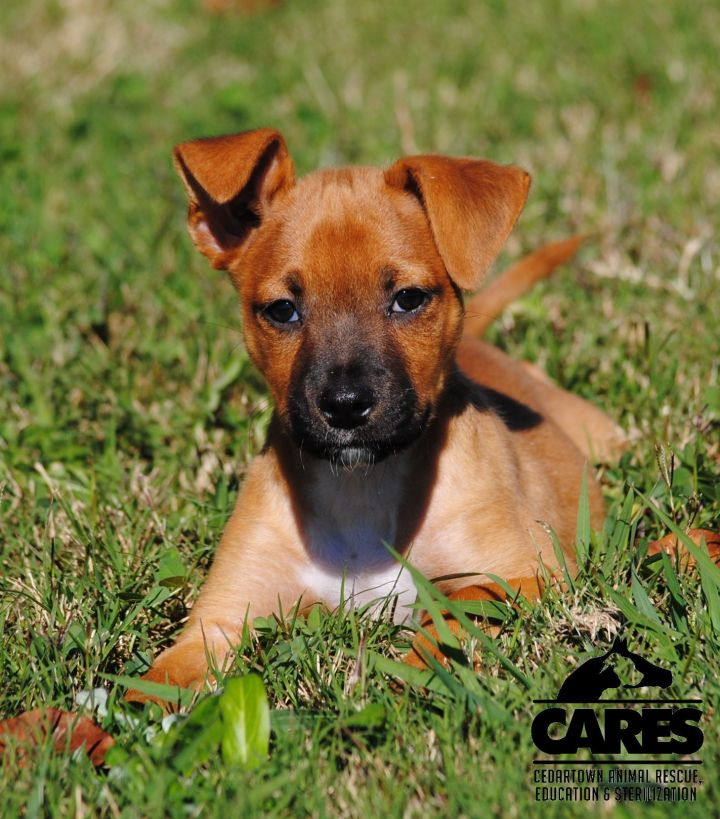 Logan, an adopted Boxer & Beagle Mix in Cedartown, GA