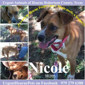 Nicole smallmed Heeler mix intake April 2014 Nicole is a sweet girl and she spent her previous l