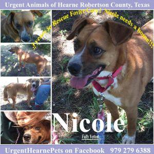 Nicole smallmed Heeler mix intake April 2014 Nicole is a sweet girl and she