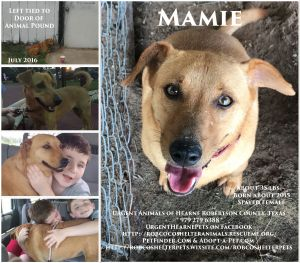Mamie is a SWEET gentle girl She was found tied to the door of the pound She loves to love