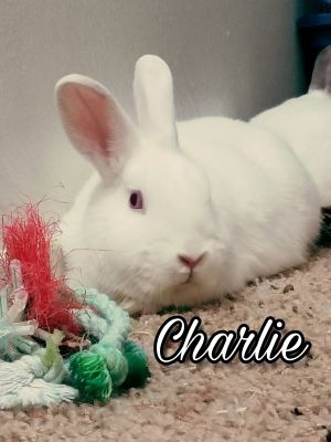 Charlie and his five siblings were rescued with their mama Charlotte from North Central Animal She