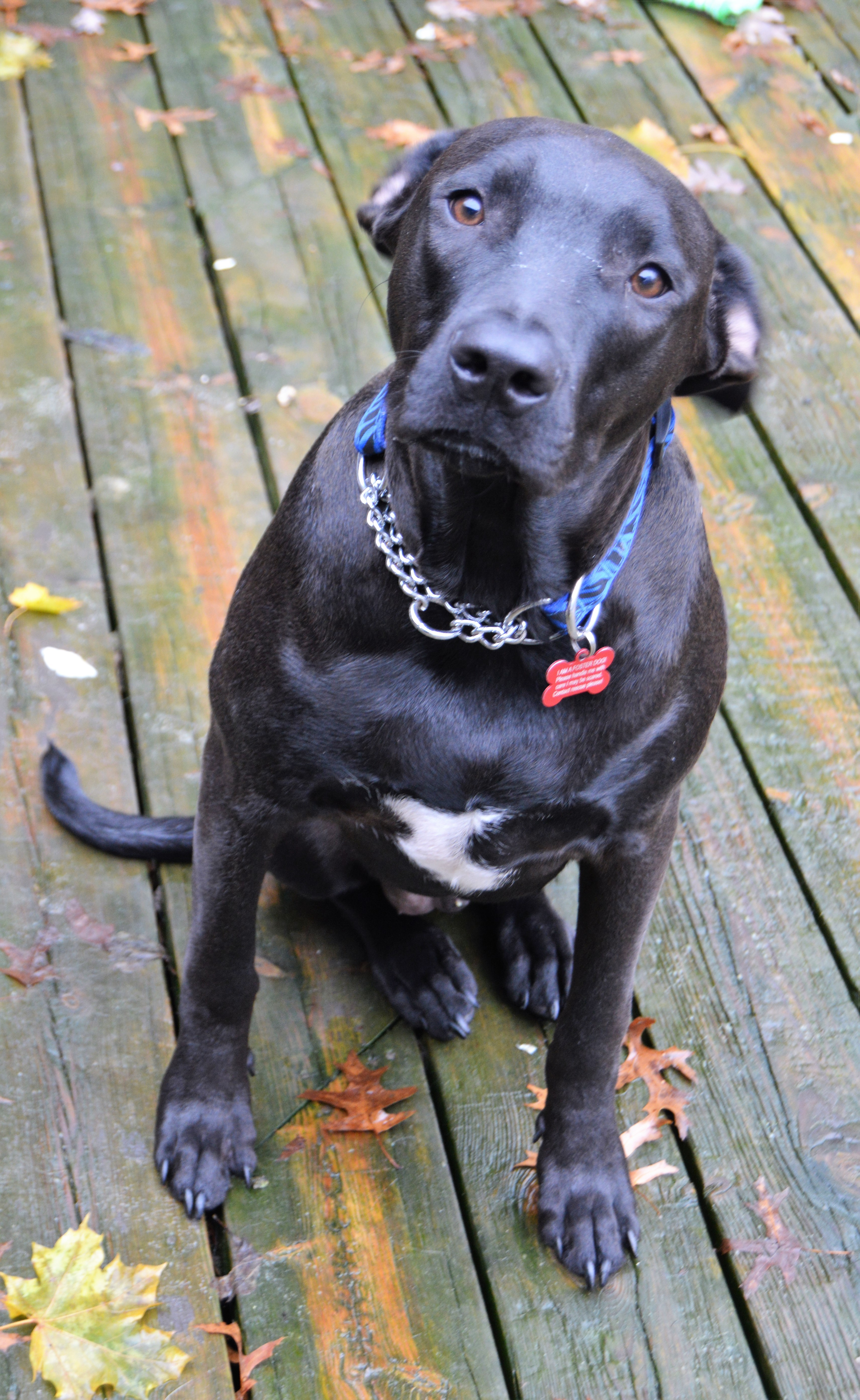 Baxter- pending adoption