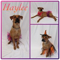 Haylee - Pawsitive Direction Program 2