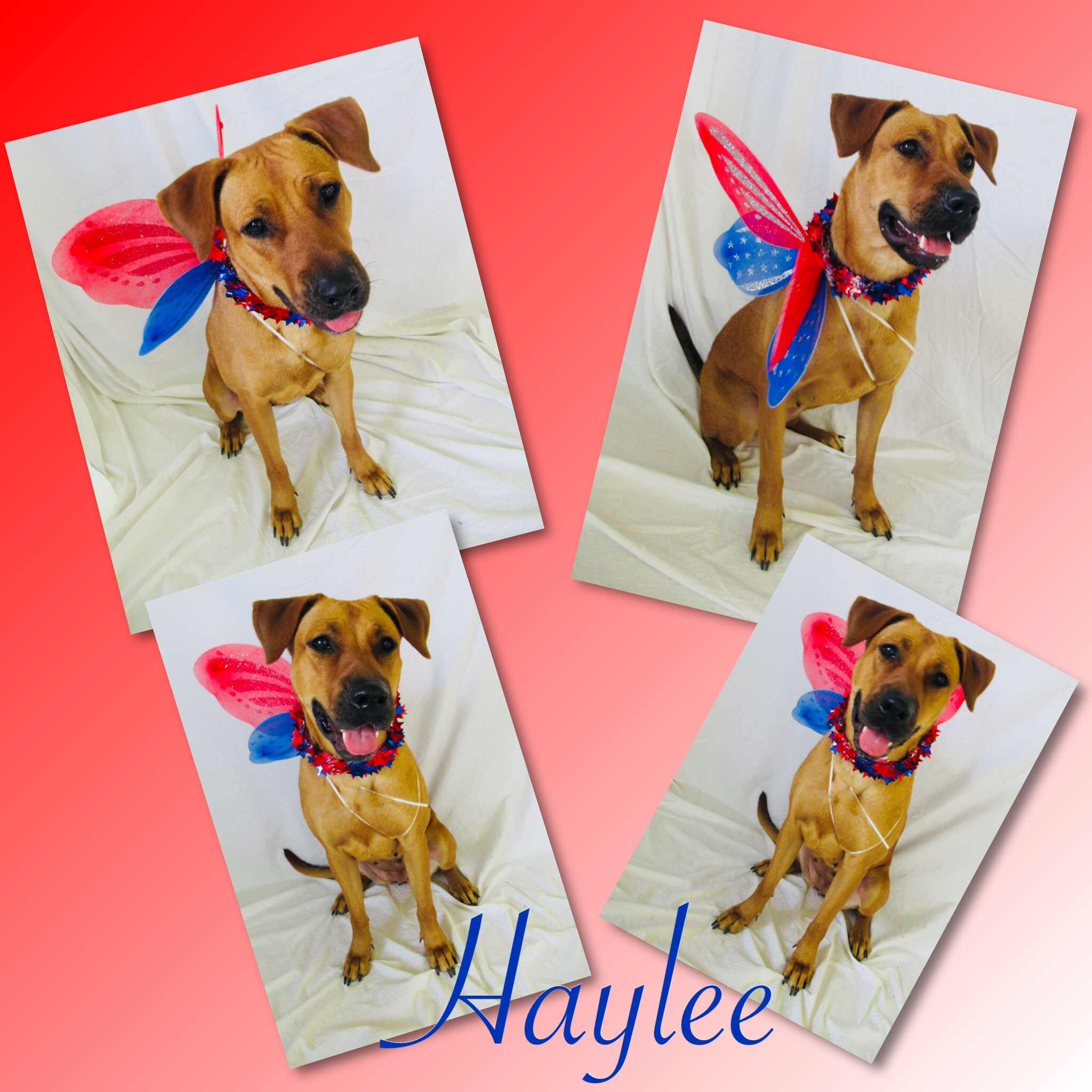 Haylee Pawsitive Direction Program detail page