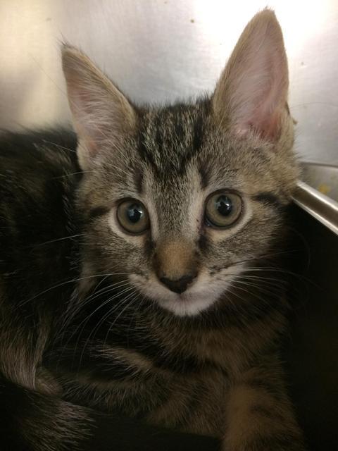 Daphne - kitten!