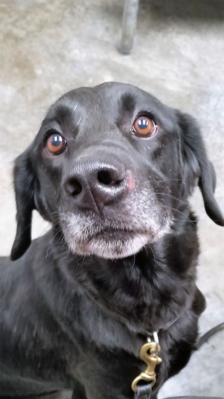 Quinn, an adopted Labrador Retriever Mix in Paducah, KY