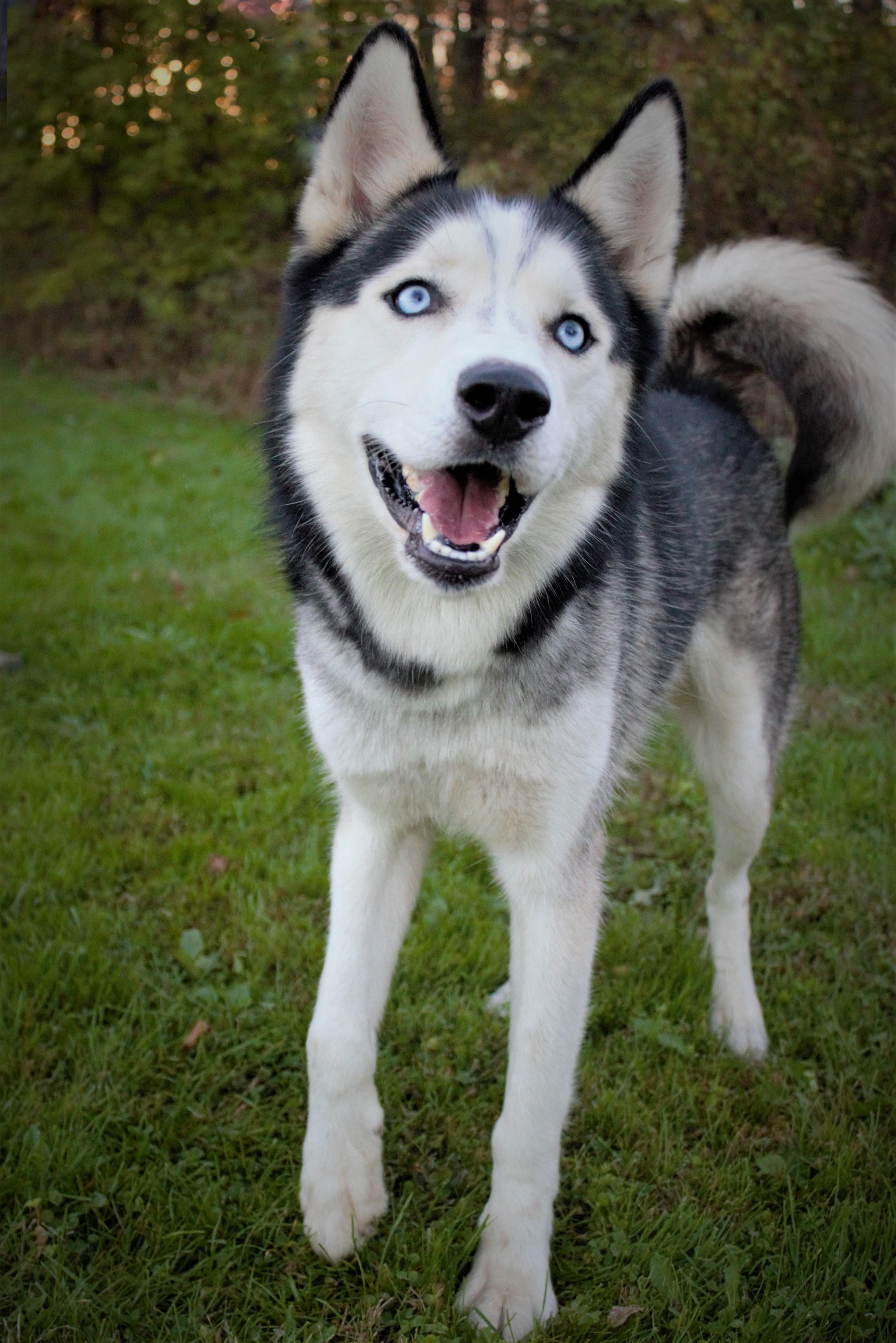Dog For Adoption Beau Near Dillsburg Pa Petfinder