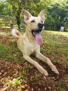 Affenpinscher Dog: Lilo