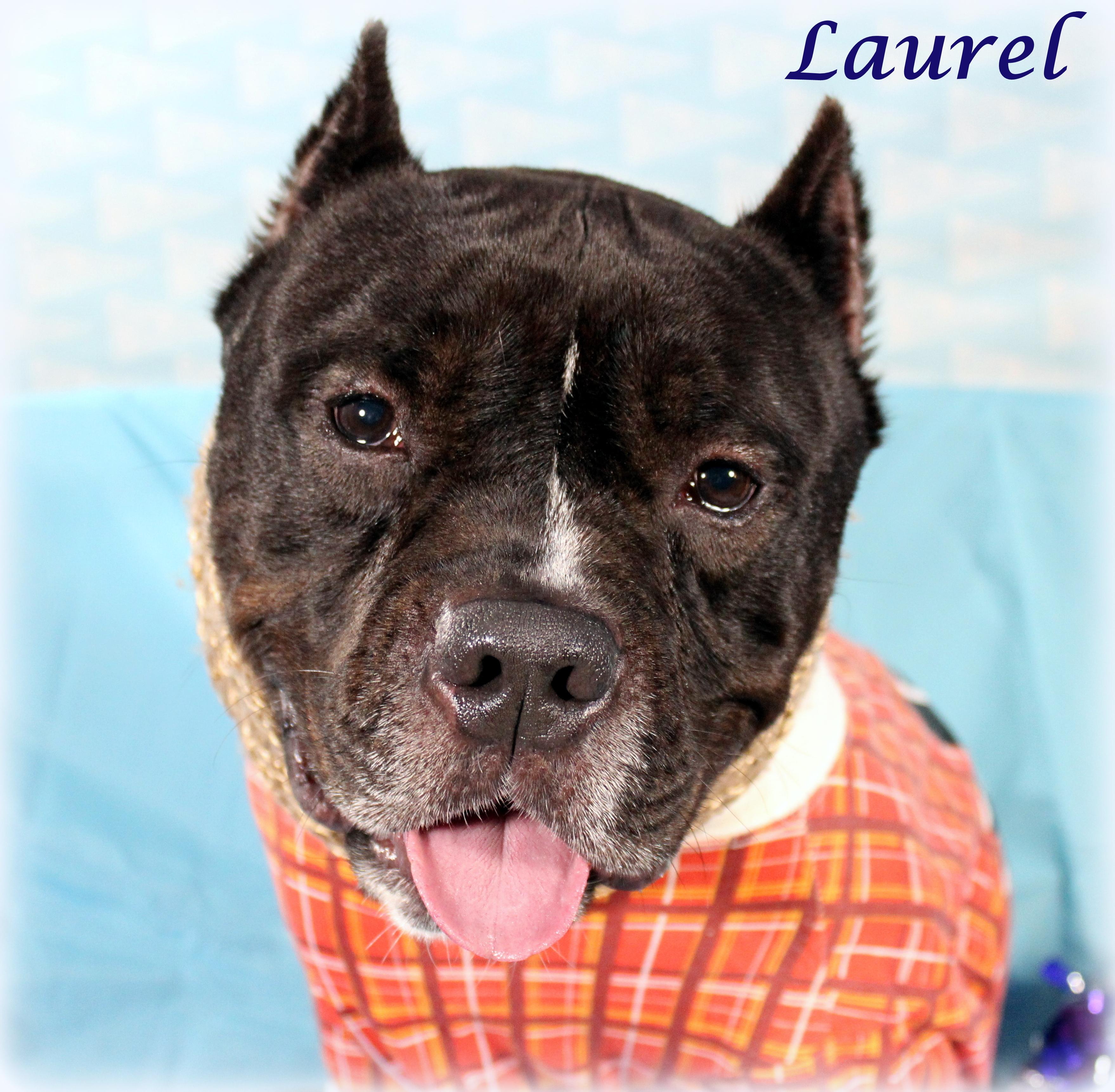 Laurel (Happy & Easygoing Boy, Good with Older Kids & Big Dogs)