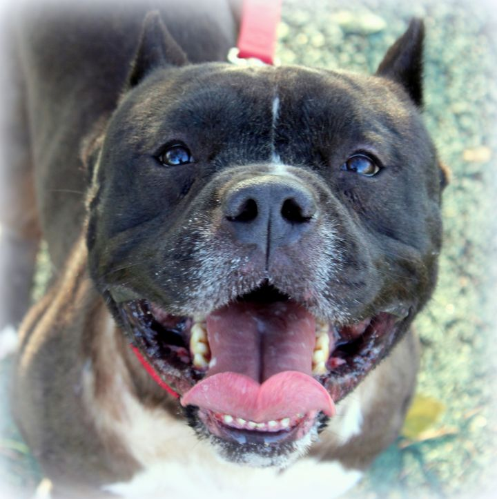 Laurel (Happy & Easygoing Boy, Good with Older Kids & Big Dogs) 3