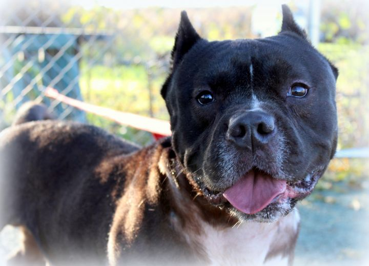 Laurel (Happy & Easygoing Boy, Good with Older Kids & Big Dogs) 4
