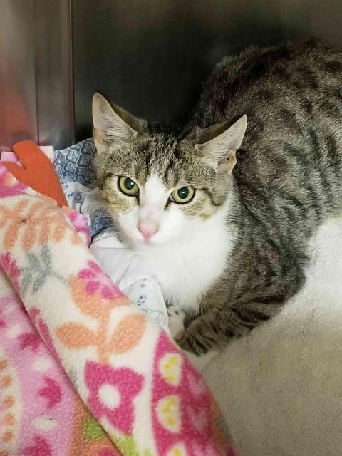 Ripley - kitten at PetSmart!