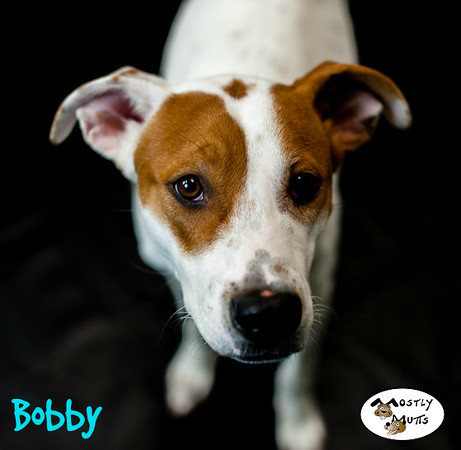 Bobby, an adopted Hound Mix in Kennesaw, GA