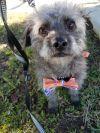 Terrier Dog: Irie