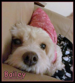 Bailey (Pending)