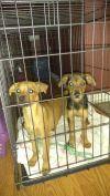 Dog Grooming Raytown Mo