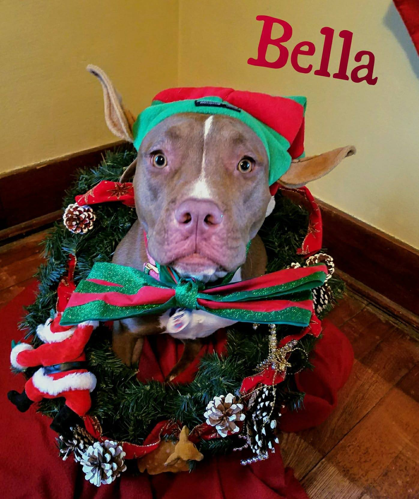 Bella-ADOPTION PENDING!!
