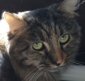 Sia is a beautiful shy three year-old who is still working on trusting adults but is not afraid of