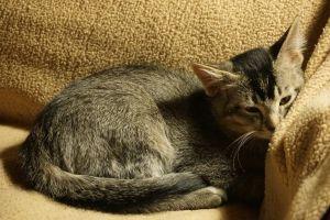 . ***COURTESY LISTING*** Kittens .